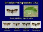 drobn kovit nepticulidae 132