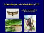 makadlovkovit gelechiidae 237