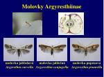 molovky argyresthiinae