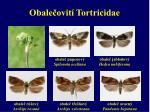 obale ovit tortricidae