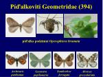 p alkovit geometridae 394