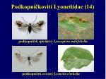 podkopn kovit lyonetiidae 14