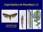 z p edn kovit plutellidae 7