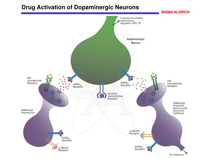 Drug Activation of Dopaminergic Neurons