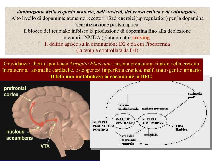 diminuzione della risposta motoria, dell'ansietà, del senso critico e di valutazione.