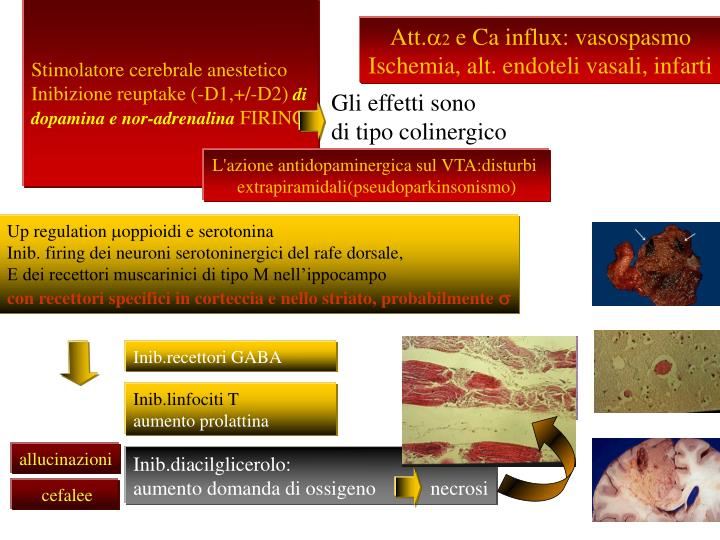 Stimolatore cerebrale anestetico