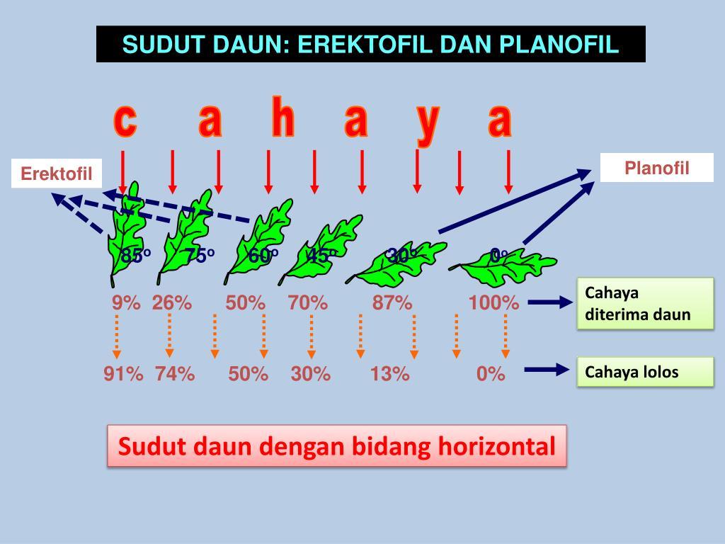PPT - DAUN MAJEMUK PowerPoint Presentation, free download ...