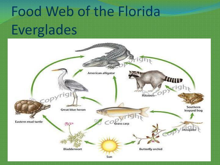 everglades cuisine web