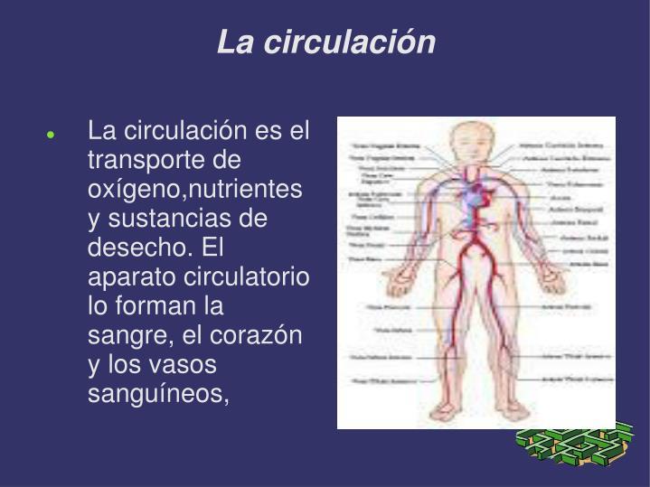 La circulación