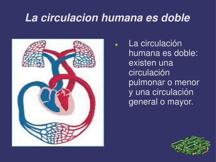 La circulacion humana es doble