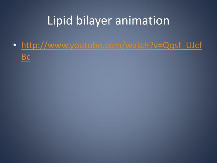 Lipid bilayer animation