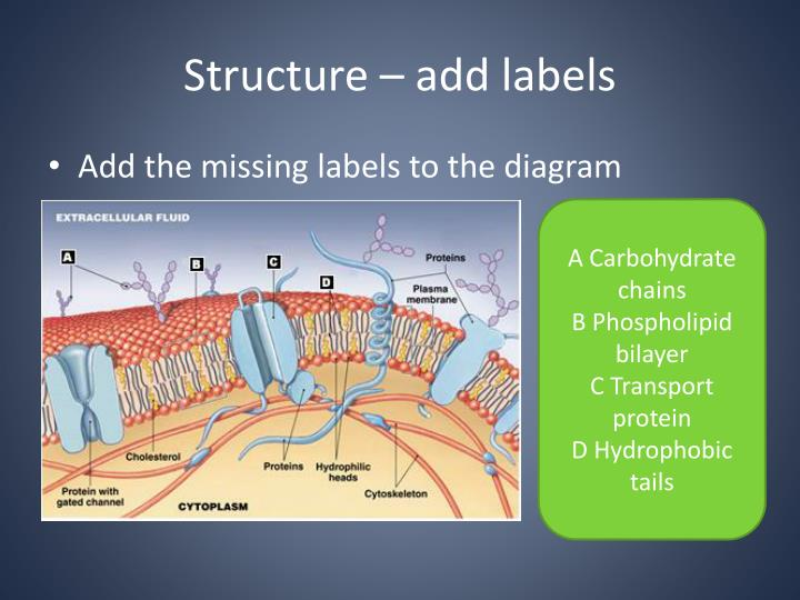 Structure – add labels