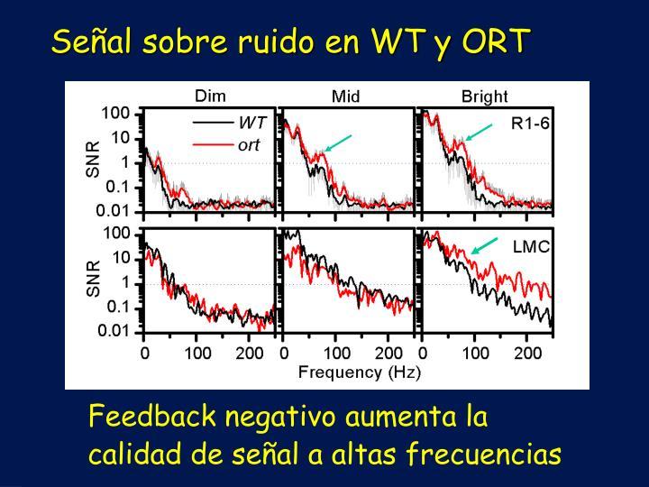 Señal sobre ruido en WT y ORT