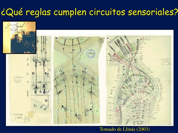 ¿Qué reglas cumplen circuitos sensoriales?