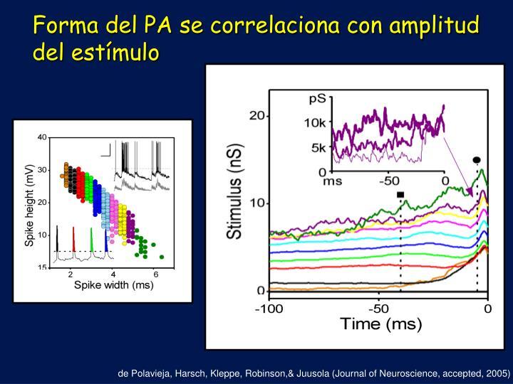 Forma del PA se correlaciona con amplitud