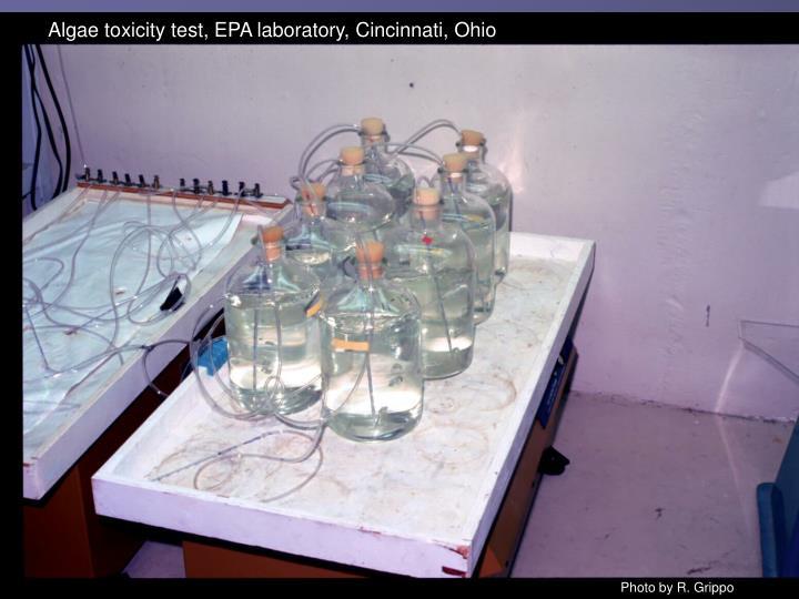 Algae toxicity test, EPA laboratory, Cincinnati, Ohio