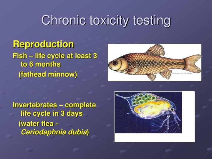 Chronic toxicity testing