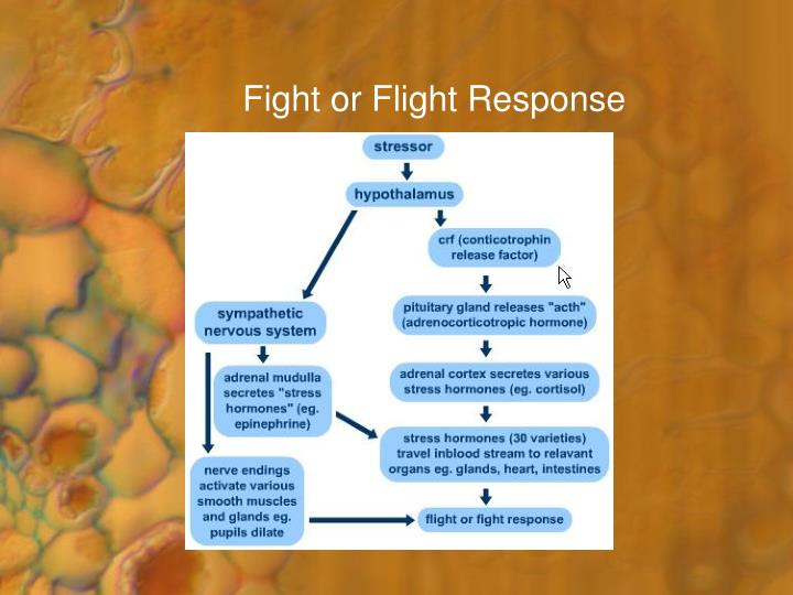 flight or fight response