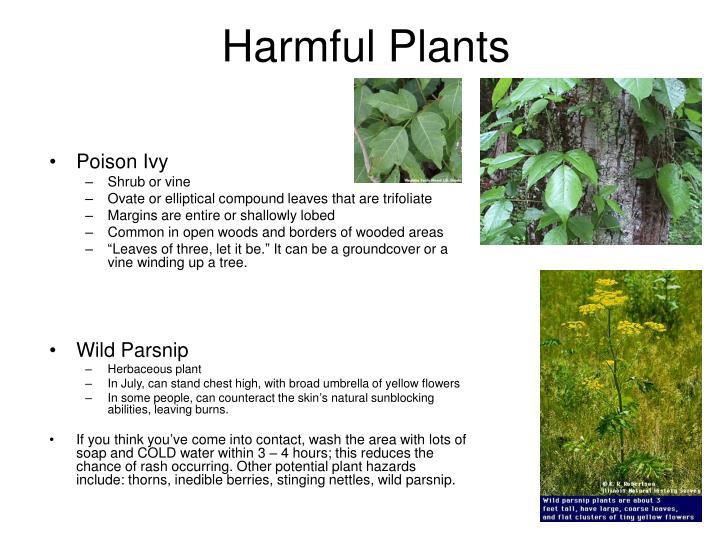 Harmful Plants