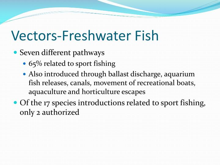 Vectors-Freshwater Fish