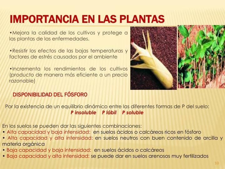 IMPORTANCIA EN LAS PLANTAS