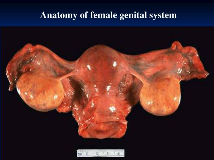 Anatomy of female genital system