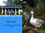 the zoo just 15 minutes from aston bandung hotel