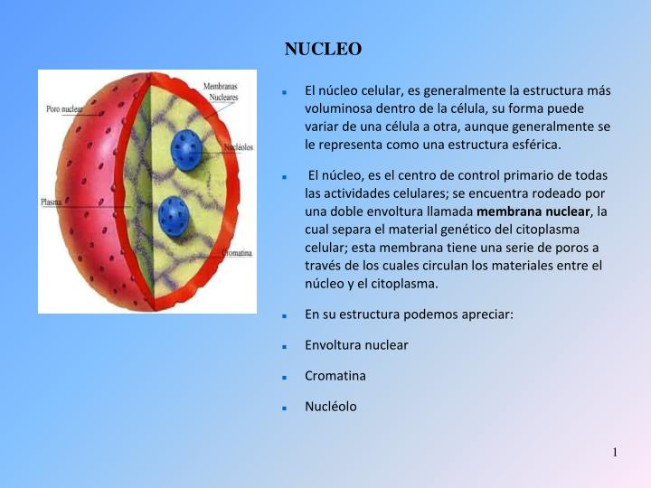 Ppt Nucleo Powerpoint Presentation Free Download Id 3885389