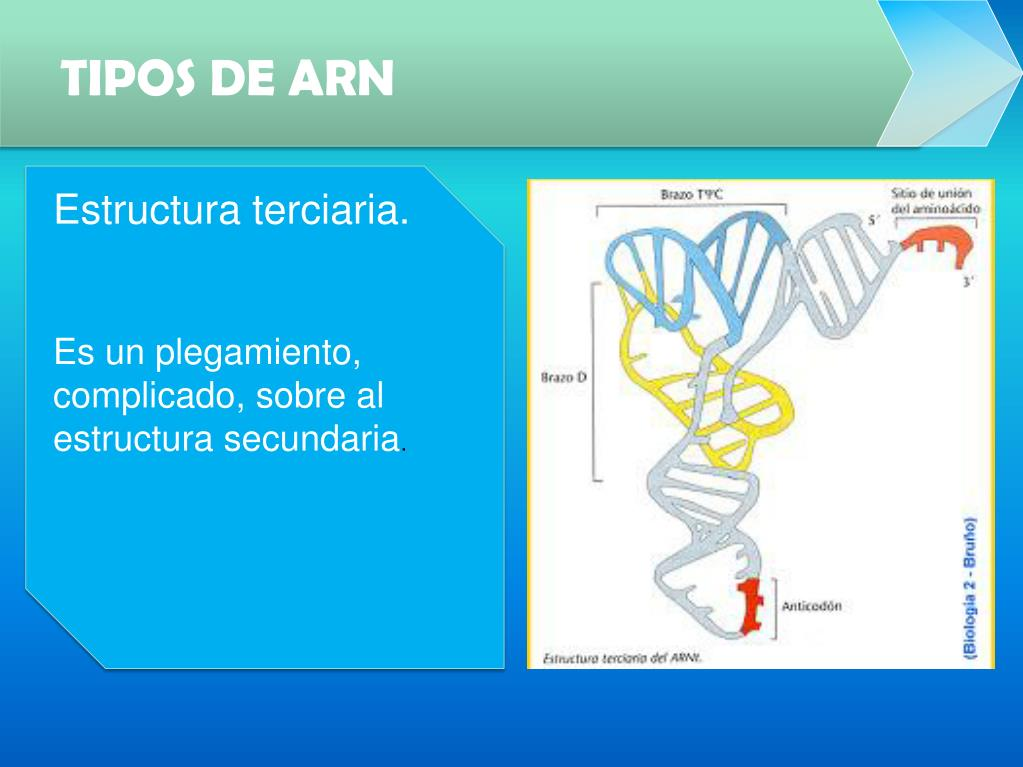 Ppt Biología Molecular Powerpoint Presentation Free
