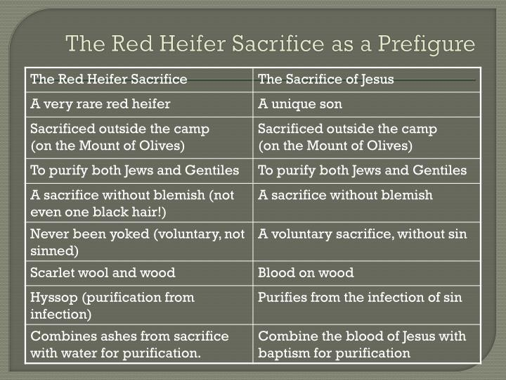 The Red Heifer Sacrifice as a Prefigure