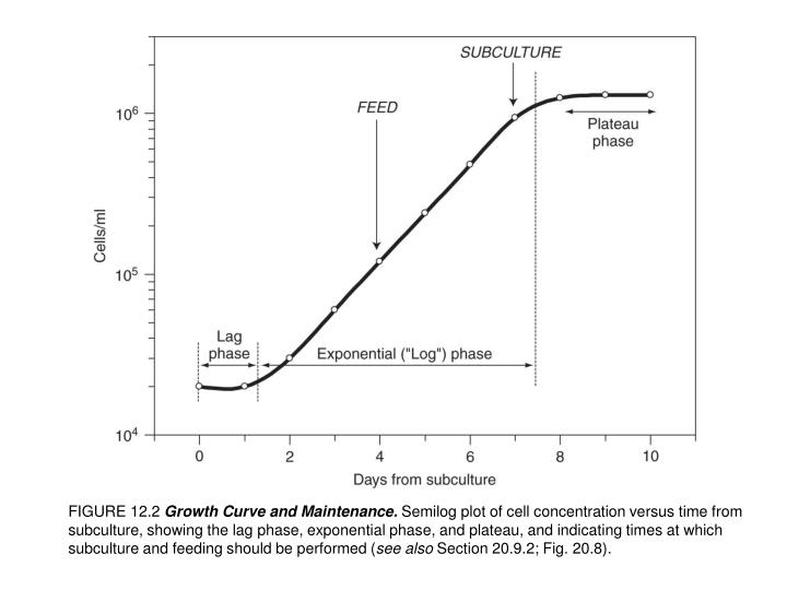 ppt figure 12 2 growth curve and maintenance semilog plot of cell