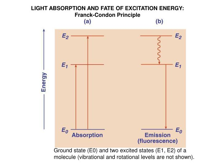 LIGHT ABSORPTION AND FATE OF EXCITATION ENERGY: