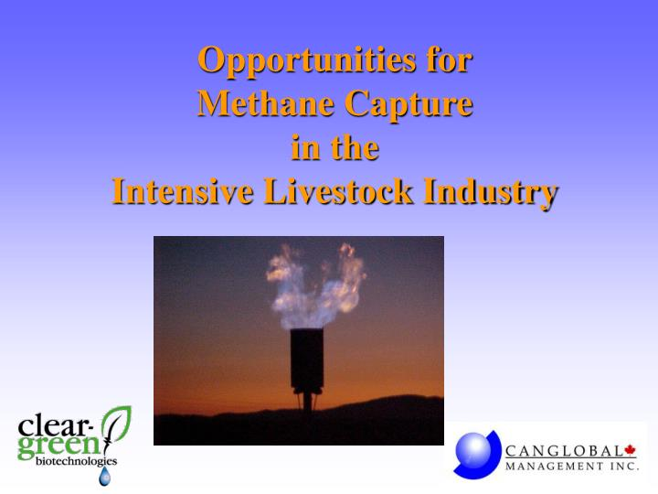 opportunities for methane capture in the intensive livestock industry n.