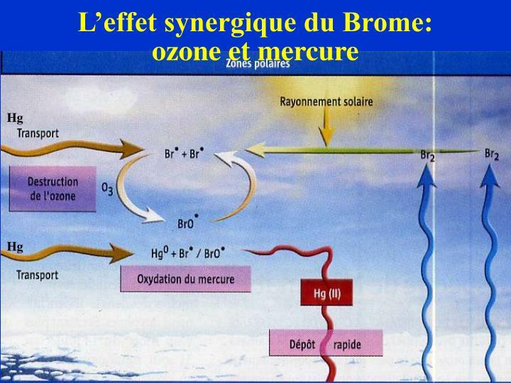 L'effet synergique du Brome: ozone et mercure