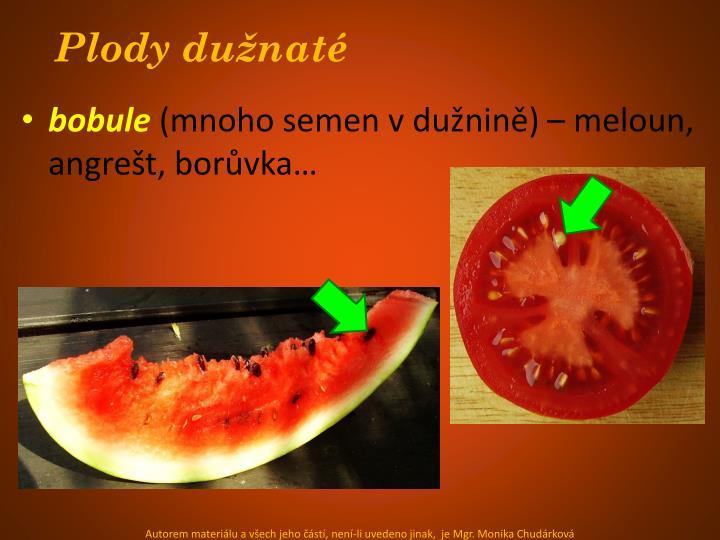 Plody dužnaté