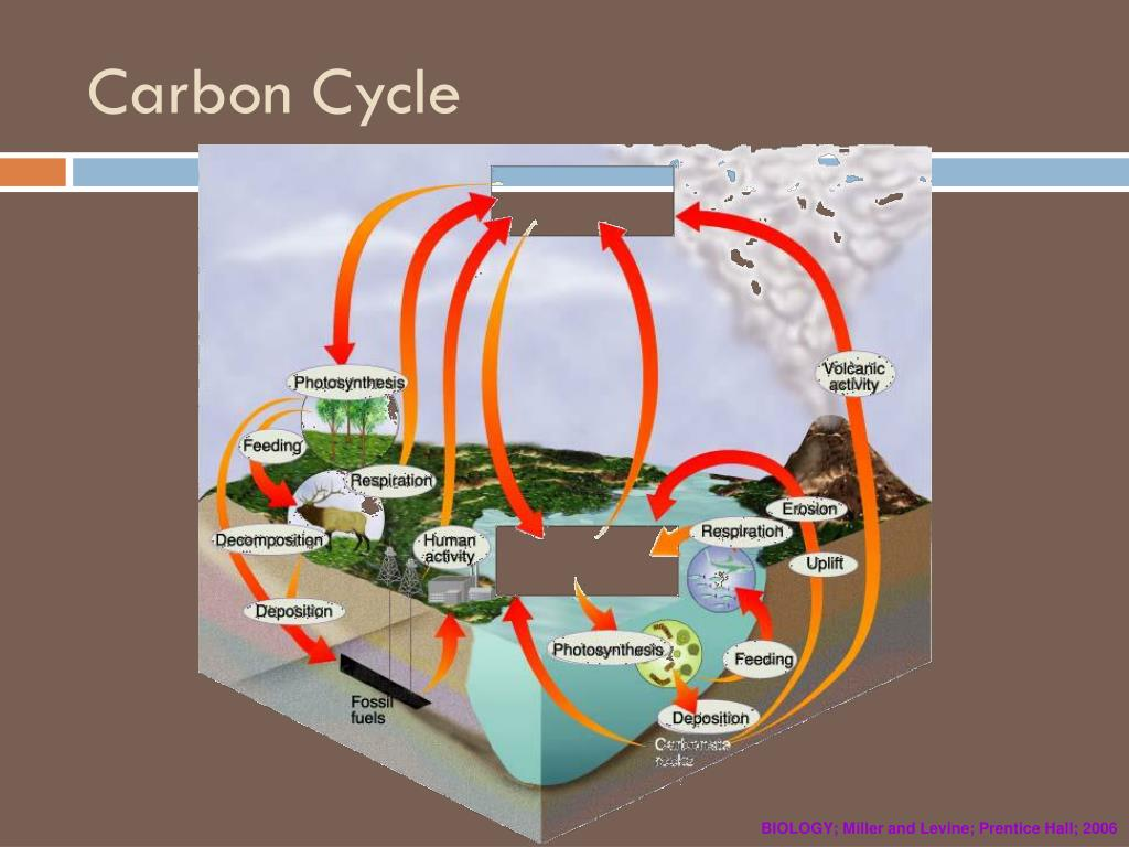 PPT - Cycling of matter PowerPoint Presentation, free ...