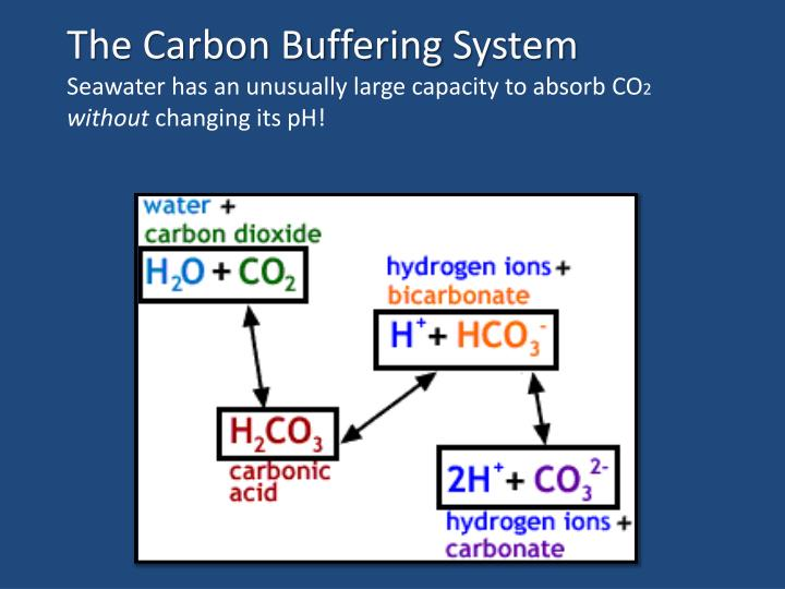carbon dioxide and hydrogen carbonate ions Bicarbonate (hco3) and carbonate (co3) ions the ph of seawater is dependent on which of these species is the most solution chemistry of carbon dioxide in seawater.