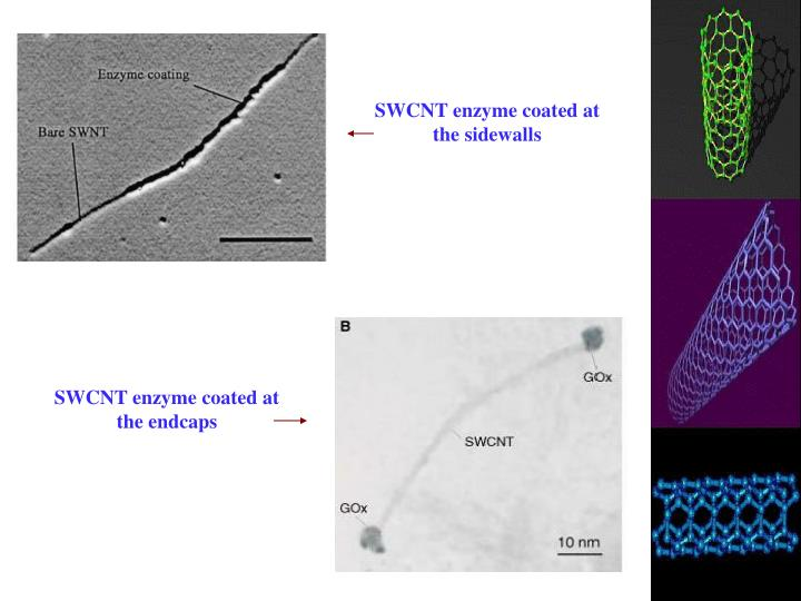 SWCNT enzyme coated at the sidewalls