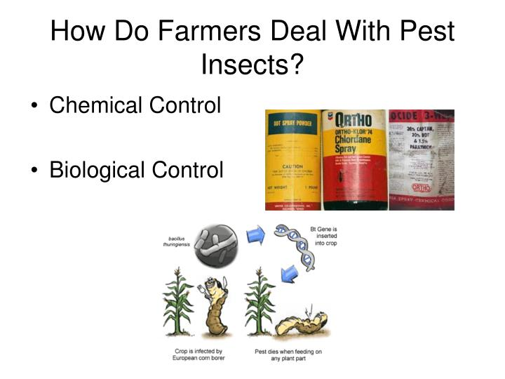 How Do Farmers Deal With Pest Insects?
