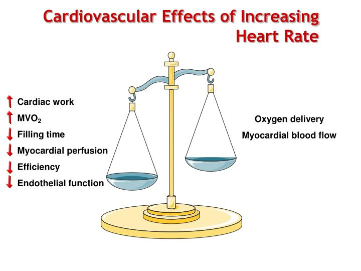 Cardiovascular Effects of Increasing Heart Rate