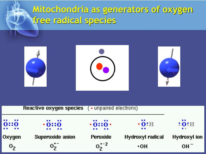 Mitochondria as generators of oxygen free radical species