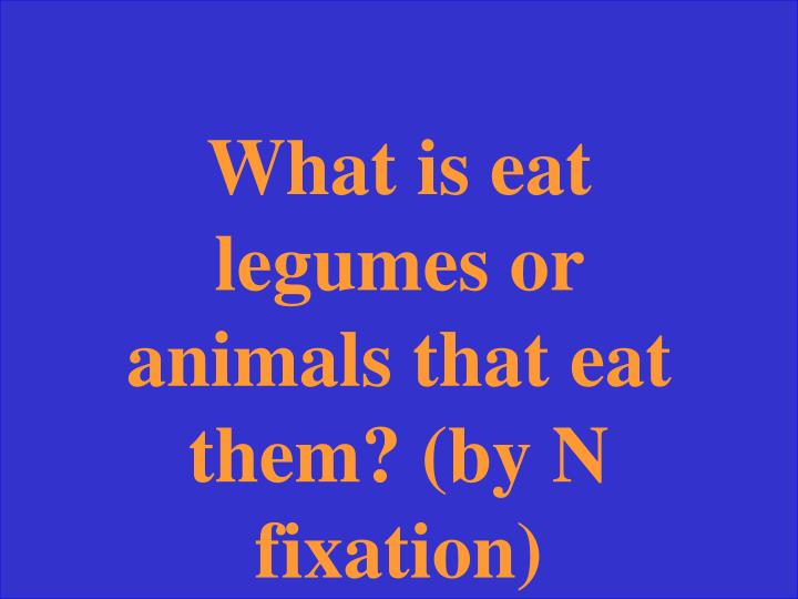 What is eat legumes or animals that eat them? (by N fixation)