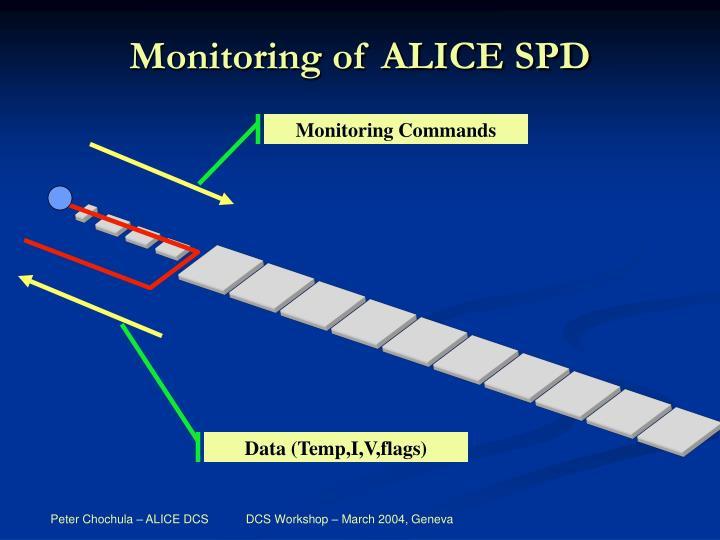 Monitoring of ALICE SPD