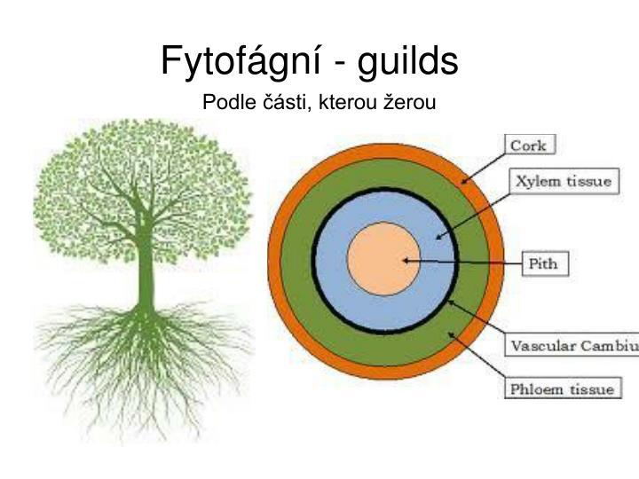 Fytofágní - guilds