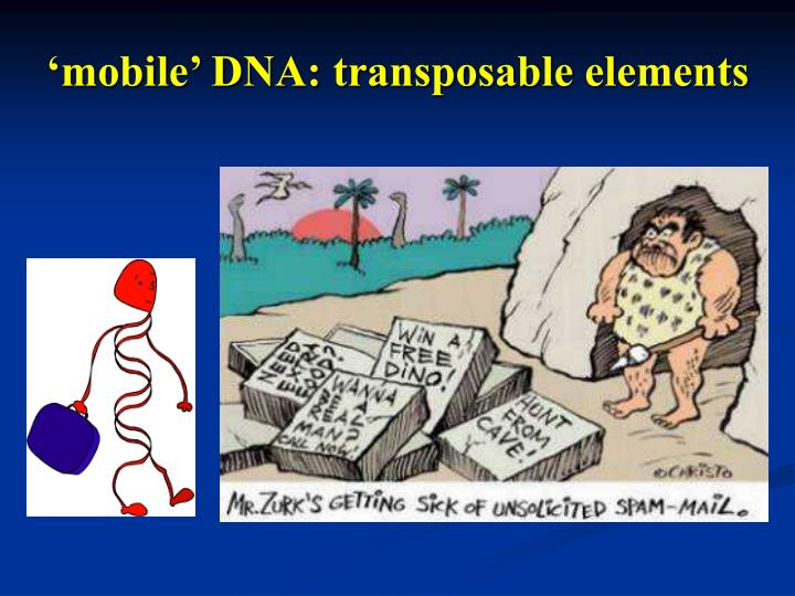 mobile dna transposable elements n.