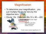 magnification1