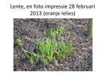 lente en foto impressie 28 februari 2013 oranje lelies
