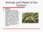 animals and plants of the tundra13