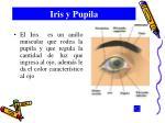 iris y pupila