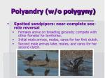 polyandry w o polygyny